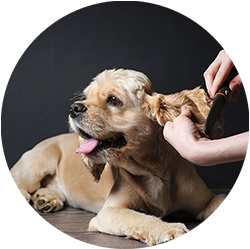 Pet Grooming Andys Grooming and Daycare