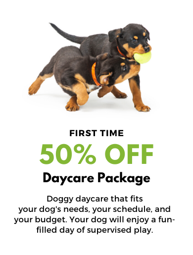 50% OFF DOGGY DAYCARE